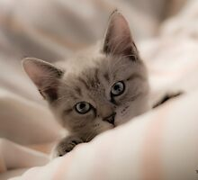Tina Picard Photography - Kitty by tinapicardphoto