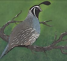 Quail by David  Postgate