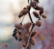 Burdock Bush, by Onondaga Lake by photoescapist