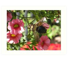 Beezy as can bee Art Print