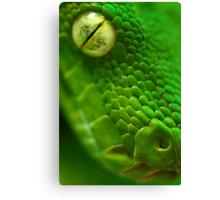 Green Python, Papua New Guinea. Canvas Print