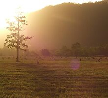 Sunset, Kangaroo Field by SullivanInc