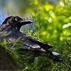 Raven woods by UncaDeej