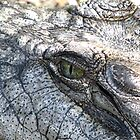 Eye of a Croc! by Tanmay Kale