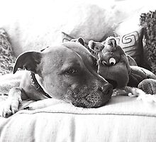 Phoenix and Scooby chilling by Mark Burt