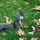 squirrel by jord3949