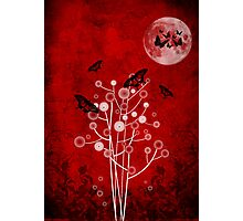 Under the Moon Photographic Print