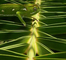 Chameleon 1 by IngridSonja