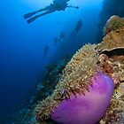 Diver's Delight - Bouganville Reef by allyazza