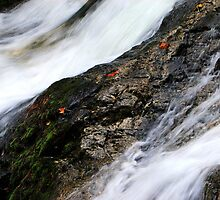Falls Creek Falls III by Lisa G. Putman