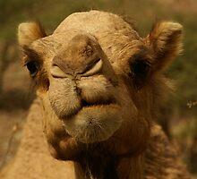 Emirates Camel II by Sturmlechner