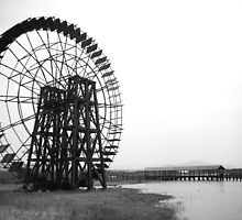 The Wheel by Alphafish