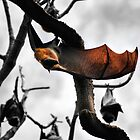 Hanging Bat by Paul Cush