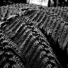 Fern Detail by Miesha