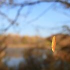 Floating Leaf by rnrphoto98