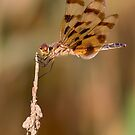 Halloween Pennant Dragonfly by Laurie L. Snidow