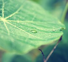 Dew on a leaf by Tutelarix