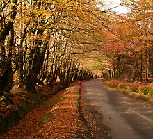 Autumn has Arrived by Robert Kendall