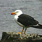 Pacific Gull by Christine Beswick