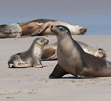 Sea Lions by fotoWerner