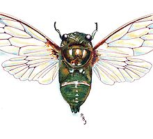 Cicada by Pete Janes