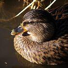 Call Duck by angelandspot