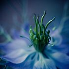 sunday in blue, surreal flower macro. by narelle sartain