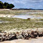 low tide by gelifranke
