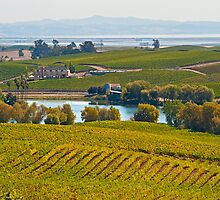 Wine Country Vista, Sonoma County, California by Cathy P. Austin