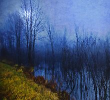 Blue Night by Mary Ann Reilly