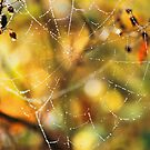 WEB WITH DEW by Chuck Wickham