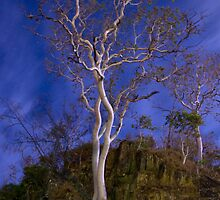Ghost Gum by Night by Patrick Robertson