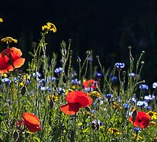 Wildflower Garden by Sarah-fiona Helme