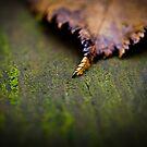 Autumn V by trbrg