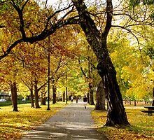 Fall Along the Charles by Alexandra Sollers