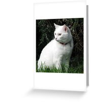 Casper  Greeting Card