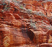 Walls of Zion by Julia Washburn