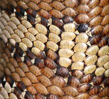 Lizard Skin by Kym Howard