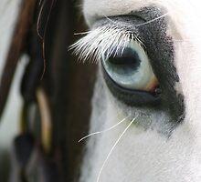The Magic of Horses by Jo McGowan