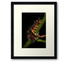 Spitfire Caterpillar Framed Print