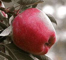 Red Okanagan Apple by Christian Langenegger