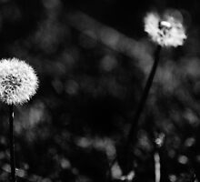 Whether or not a flower is deemed a weed is a matter of perspective by Jessica Glade