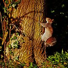 Nuts Here I come by Paul Adkin