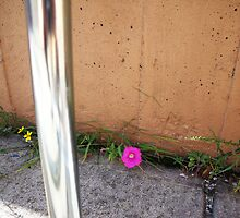 Lone Flower Near a Bike Rack (Edited) by TJ Trubert