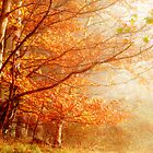 Autumn Mist by Robin Brown