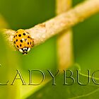 Lady in Gold by Trudy Wilkerson