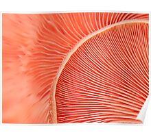 Marvelling the Mushroom Poster