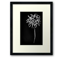 sweet/spikes Framed Print