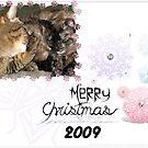 Christmas Card Cats by PhotosbyNan