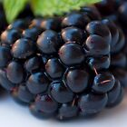 Blackberry by sanyi